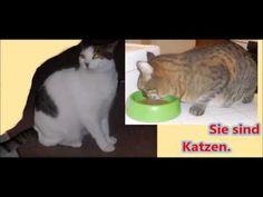 Sie sind Katzen Cats Pets Gatos Коты
