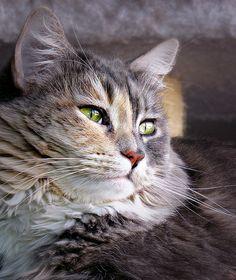 Cat  Squeaky.