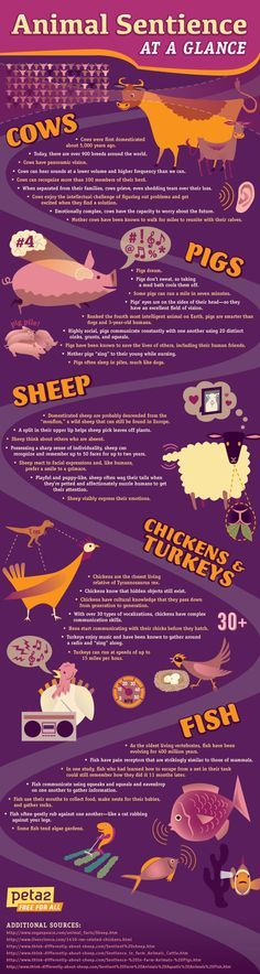 Helpful Vegan Infographics   Lifestyle   peta2.com