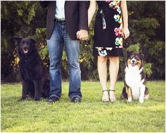 Engagement portraits with the dogs. They're family too.
