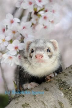 I want a Ferret... They are so cute.