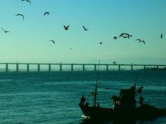Baía de Guanabara - Rio de Janeiro - RJ, Ponte Rio-Niterói, aves, peixe, pescaria, pescador, Barco, maresia,blue, azul, sky, céu. calmaria. foto, fotograph