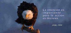 Deja de Ser Una Gallina y Conviertete en Un Aguila :)