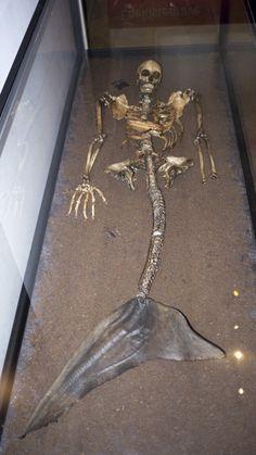 Not quite the Little Mermaid - the Haraldskaer Mermaid Skeleton at the National Museum in Copenhagen