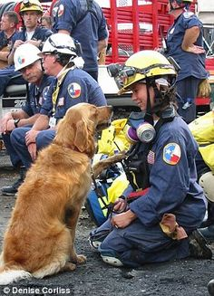 9/11 rescue dog Bretagne treated to a hero's welcome in New York | Daily Mail Online