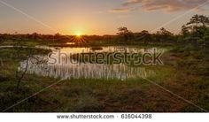 Sunrise in the bog - amazing photo of Estonian nature. Shutterstock contributor.
