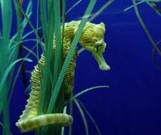 Seahorse underwater world