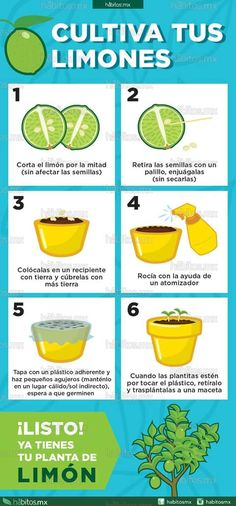 Houseplants That Filter the Air We Breathe Hbitos Health Coaching Cultiva Tus Limones Eco Garden, Green Garden, Edible Garden, Garden Plants, Water Garden, Plantas Indoor, Green Life, Growing Plants, Health Coach