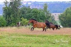 schreiben und fotografieren: Pferdefotografie-Seminar auf dem Trakehnergestüt a...