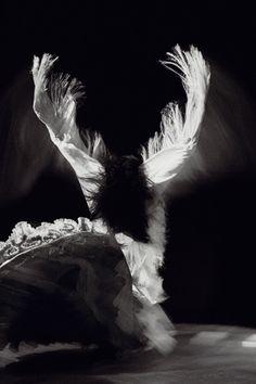RETRATANDO LAS ALAS DE UN ÁNGEL - Eva Yerbabuena Ballet Flamenco -