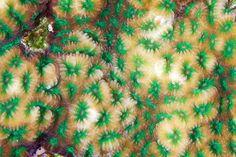texture corai 08 La texture des coraux  technologie photographie bonus animaux technologie
