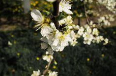 blossom by Marius Fechete on 500px