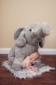 vintage pretty: Newborn Photography - cute elephant for center piece Newborn Poses, Newborn Baby Photography, Children Photography, Newborns, Baby Boy Photos, Newborn Pictures, Baby Pictures, Big Stuffed Animal, Stuffed Animals