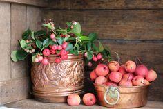 Kleur op het winerterras met verschillende planten http://blog.huisjetuintjeboompje.be/kleur-op-winerterras/