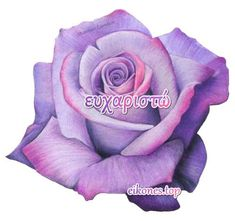 mov triantafyllo Colored Pencil Artwork, Color Pencil Art, Love Rose Flower, Flower Art, Rose Zeichnung Tattoo, Watercolor Flowers, Watercolor Paintings, Realistic Flower Drawing, Rose Reference