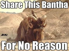 Bantha from Star Wars Movie animals Film Star Wars, Star Wars Episoden, Star Wars Episodio Iv, Starwars, Tusken Raider, Episode Iv, The Phantom Menace, Original Trilogy, A New Hope