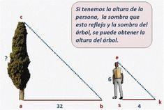 Triángulos Semejantes - Spanish GED 365 - GED en Español