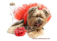 Buy Days of Wine & Roses by Lisafx on PhotoDune. A sad yorkshire terrier in a satin gown with a rose is drowning her sorrows with champagne. Inspirational Quotes About Love, Great Quotes, Love Quotes, My Philosophy, Always You, Heartbroken Quotes, Terrier, Stock Photos, Pet Puppy
