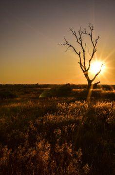 10 things we love about Mildura. RoyalAuto March, 2016.