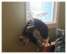 20 Hilarious Photos Of Animals Being Clumsy