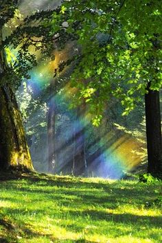 """""""Porque há esperança para a árvore que, se for cortada, ainda se renovará, e não cessarão os seus renovos. Se envelhecer na terra a sua raiz, e o seu tronco morrer no pó, ao cheiro das águas brotará, e dará ramos como uma planta.""""  Jó 14:7-9 #Livro Jó #amor"""