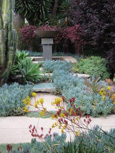 Super landscaping front yard california kangaroo paw Ideas - All For Garden Dry Garden, Garden Shrubs, Landscaping Plants, Planting Succulents, Landscape Design, Garden Design, California Garden, Venice California, California Native Plants