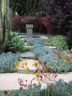 loving the height and depth with cactus, agave and senecio covered ground