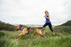 Get in Shape. Top tips for working out with your dog.