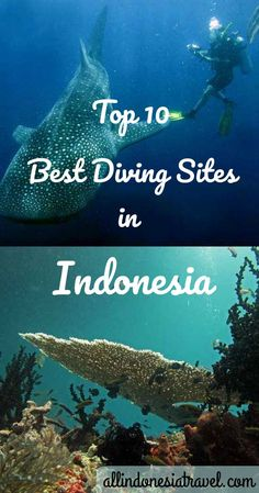 Top 10 Best Diving Sites in Indonesia |  Indonesia has one of the longest coastline in the world stretching from the Indian Ocean to the east and Pacific Ocean to the west. Being part of the Coral Triangle of the world.There are over 3000 fish species and 600 coral species to discover, where the dive sites come in diverse types from coral, steep walls, deep water trenches, wrecks and underwater volcanic mountains. To top it off, diving in Indonesia is affordable…