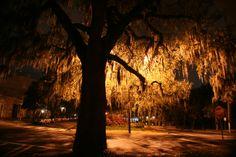 Near Colonial Park Cemetery in downtown Savannah Georgia