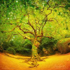 Golgotha Tree by Miguel-Santos on deviantART