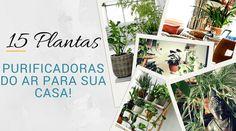 Plantas purificadoras do ar para sua casa! Além de decorar os ambientes, elas purificam o ar que respiramos. Você tem essas plantas em sua casa?