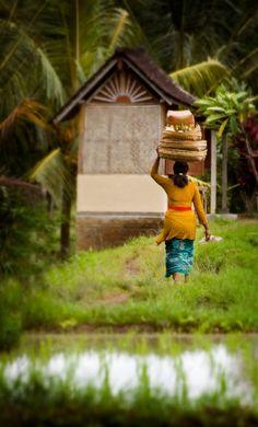 Ubud, Bali, Indonesia outside of Jakarta, Bali on the way to Belingbing. Rice paddies, a simple life there. Bali Lombok, Jakarta, Laos, Philippines, Beautiful World, Beautiful Places, Brunei, Sri Lanka, Timor Oriental