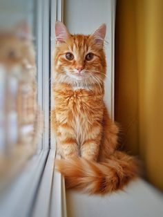"""Cat says, """"Should I jump?"""" The owner says, """" No I love you like your my life!!!! """" the cat says, """"Uh... I didn't mean that I'm staying!😻"""""""