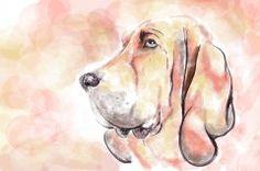 Fototapeta F4166 - Portret psa gończego