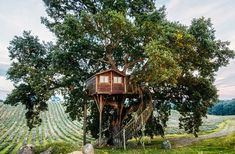 This roundup is gorgeous tree houses around the world is seriously jaw-dropping!