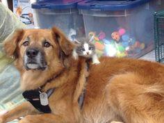 Kukapa ei vastasyntyneitä eläimiä rakastaisi. Koiranpennut, kissanpennut, pienet kaniininpoikaset, vastasyntyneet sorsanpoikaset – ne sulattavat sydämen hetkessä. Tässä on listattuna 29 eläimenpoikasta, jotka nostavat lemmikkikuumeen korkealle....