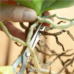 Orchid Care Guide Orchids are not like other houseplants that require low care. Orchid care and maintenance is different; but this doesn't mean you can't grow it-- With this guide, you can learn how to do this! Orchids Garden, Orchid Plants, Garden Plants, Indoor Plants, Indoor Orchids, Orchid Repotting, Indoor Orchid Care, Orchid Plant Care, Succulent Plants