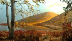 amnhnyc:  Autumn is in full swing, and the Northeast US is a riot of colors. What causes this seasonal change? We've got the answers to all of your fall foliage questions here: WHERE DO LEAF COLORS COME FROM? Leaves are green in the summer because they contain a great deal of the pigment chlorophyll. Chlorophyll is necessary for the process of photosynthesis, which plants use to make food. Chlorophyll is not the only pigment in leaves, but during the summer there's so much of it that no ...
