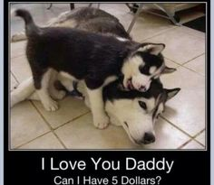 Haha! so adorable!  | See more fun videos here: http://gwyl.io/