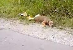 'Dead' Dog On Side Of Road Lifts Her Head To Tell Woman She's Alive