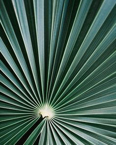"""Polubienia: 15.3 tys., komentarze: 39 – @500px na Instagramie: """"""""Striped of palm leaf"""" by @gabrielatulian Profile: 500px.com/gabrielatulian #500px #tulum…"""""""