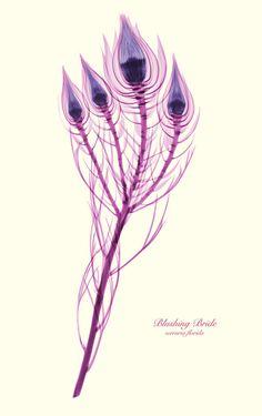 X-Ray Blushing Bride flower.