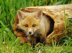 Image result for cute woodland animals