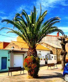 Interesting one by padinfandino #landscape #contratahotel (o) http://ift.tt/1TxZDVL con flores // Palm trees with flowers.  #paisajes s #galicia #españa #spain #arousa #pontevedra #cielo #sky #plaza #square #palmeras #palm #tree #naturaleza #nature #edificio #buildings #arbol #tree