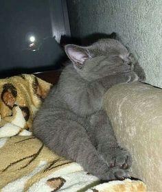 Urgulliga kattungar och deras udda ställningar.