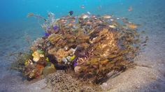Diving Manado Bay Highlights - Murex Dive Resorts