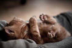 Adorable sleepy kitten via Mousebreath! A magazine for cats ~ Sweet Dreams beautiful friends ♥ Cute Kittens, Beautiful Kittens, Animals Beautiful, Fluffy Kittens, Pretty Cats, Beautiful Things, Baby Cats, Baby Animals, Funny Animals