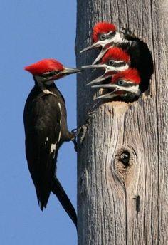 Письмо «Еще Пины для вашей доски «фото птицы»» — Pinterest — Яндекс.Почта