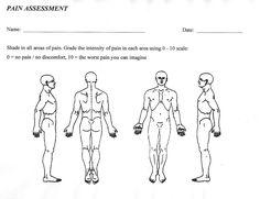 Free Diagrams Human Body   human body digestive human free